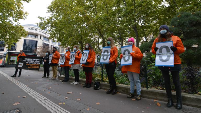 L214 dénonce la cadence élevée des animaux tués en France